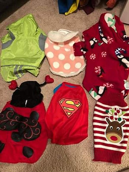 ad small dog clothing lot